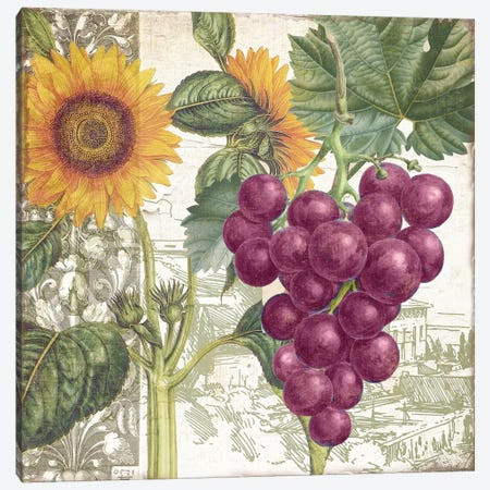 Dolcetto II Canvas Print #CBY332} by Color Bakery Canvas Art