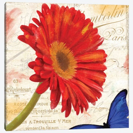 Gerbera Daisy Canvas Print #CBY445} by Color Bakery Canvas Art Print