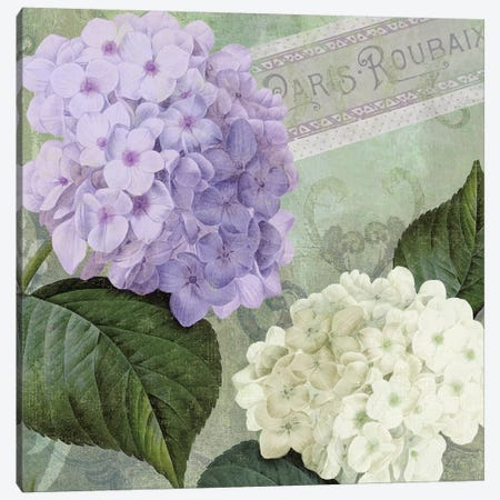 Hortensia I Canvas Print #CBY498} by Color Bakery Art Print