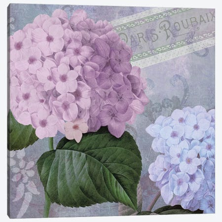 Hortensia II Canvas Print #CBY499} by Color Bakery Art Print