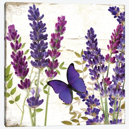 Lavande I Canvas Print #CBY548} by Color Bakery Canvas Print