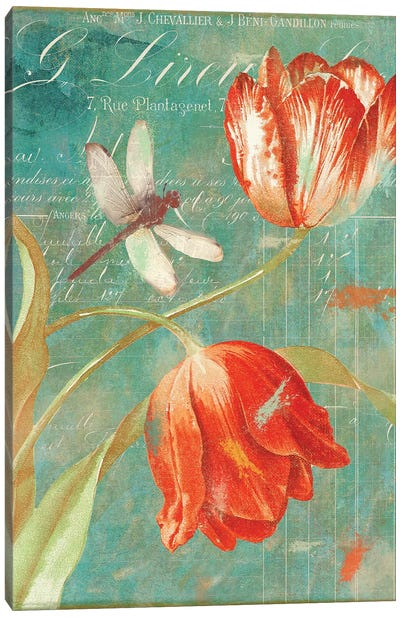 Mandarin Tulips Canvas Art Print