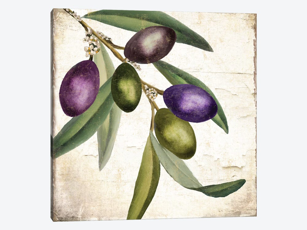 Olive Branch I by Color Bakery 1-piece Canvas Print