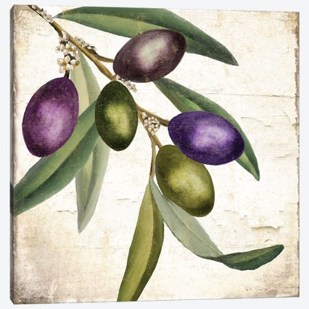 Olive Branch I Canvas Print #CBY676} by Color Bakery Canvas Art