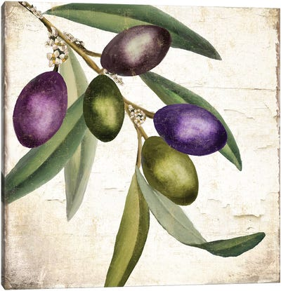 Olive Branch I Canvas Art Print