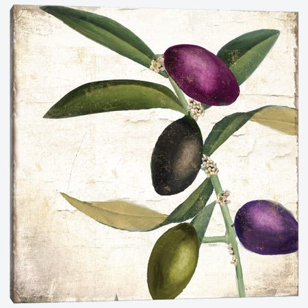 Olive Branch II Canvas Print #CBY677} by Color Bakery Canvas Wall Art