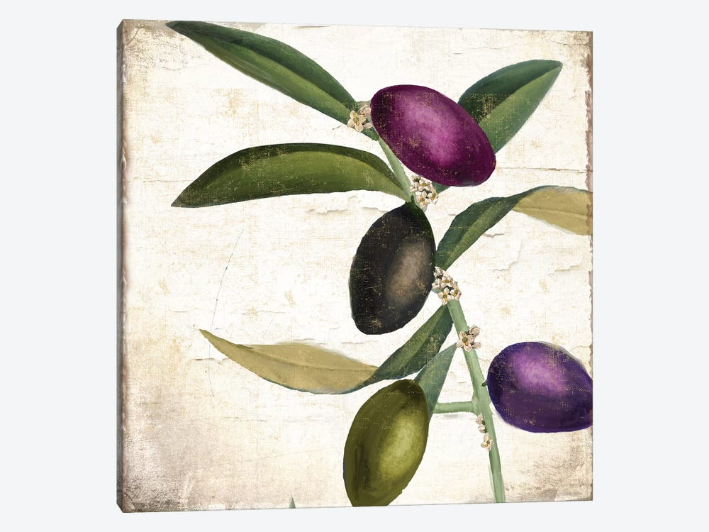 Olive Branch II by Color Bakery 1-piece Canvas Artwork