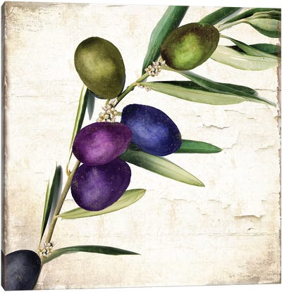 Olive Branch III Canvas Art Print
