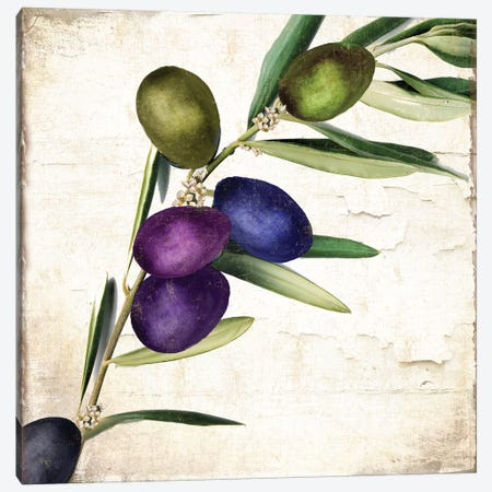 Olive Branch III Canvas Print #CBY678} by Color Bakery Canvas Print