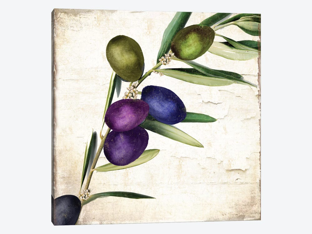 Olive Branch III by Color Bakery 1-piece Canvas Art Print