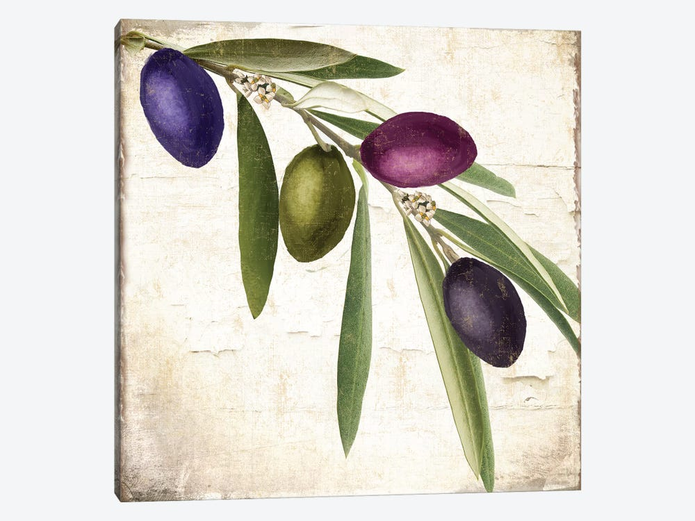 Olive Branch IV by Color Bakery 1-piece Canvas Wall Art