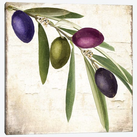 Olive Branch IV Canvas Print #CBY679} by Color Bakery Art Print