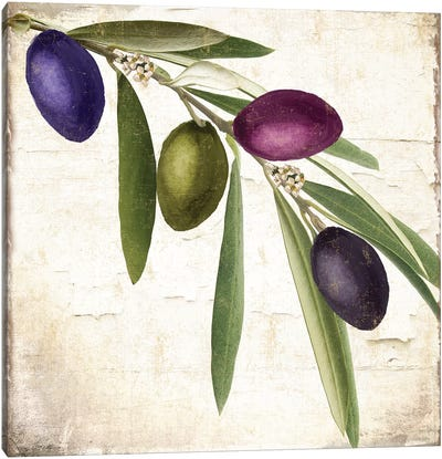 Olive Branch IV Canvas Art Print
