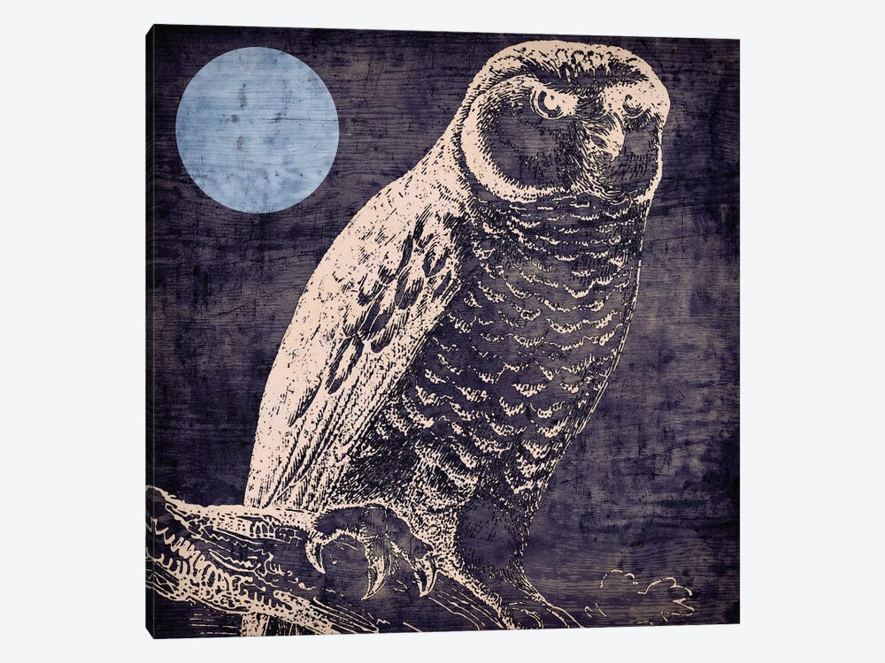 Owl I by Color Bakery 1-piece Canvas Artwork