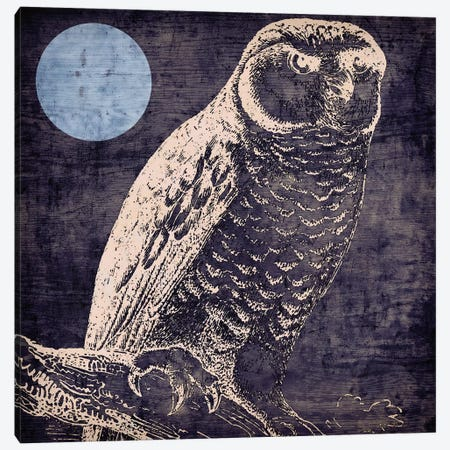 Owl I Canvas Print #CBY695} by Color Bakery Canvas Artwork