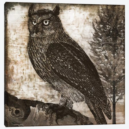 Owl II Canvas Print #CBY696} by Color Bakery Canvas Wall Art