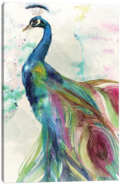 Peacock Canvas Art Print