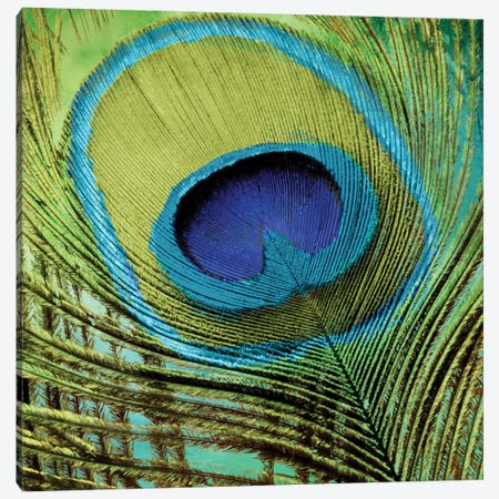 Peacock Candy V Canvas Print #CBY749} by Color Bakery Canvas Art Print