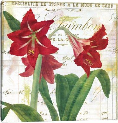 Peppermint Amaryllis Canvas Art Print