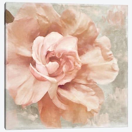 Petals Impasto I Canvas Print #CBY771} by Color Bakery Canvas Artwork