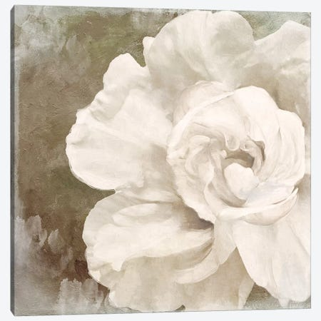 Petals Impasto II Canvas Print #CBY772} by Color Bakery Canvas Artwork