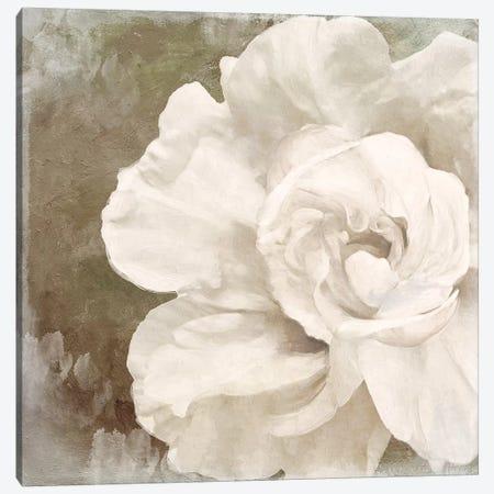 Petals Impasto II Canvas Print #CBY772} by Color Bakery Canvas Artwork