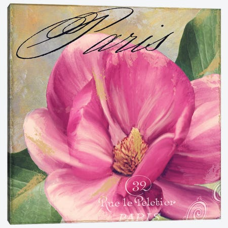 Pink Magnolia I Canvas Print #CBY781} by Color Bakery Art Print