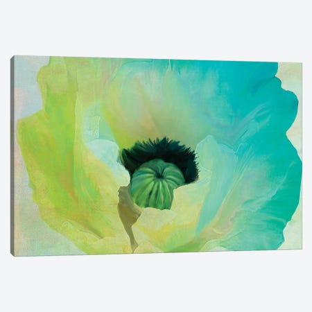 Poppy Gradient I Canvas Print #CBY793} by Color Bakery Canvas Artwork