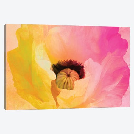 Poppy Gradient II Canvas Print #CBY794} by Color Bakery Art Print
