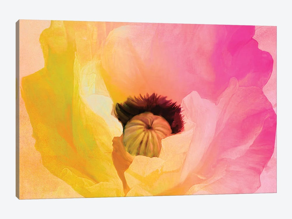 Poppy Gradient II by Color Bakery 1-piece Canvas Artwork