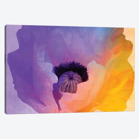 Poppy Gradient III Canvas Print #CBY795} by Color Bakery Art Print
