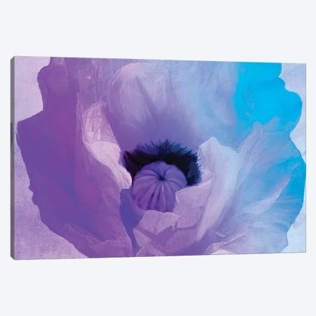 Poppy Gradient IV Canvas Print #CBY796} by Color Bakery Canvas Art Print