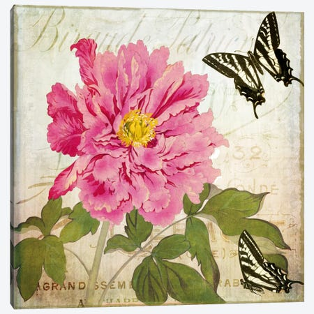 Aja Canvas Print #CBY80} by Color Bakery Canvas Print