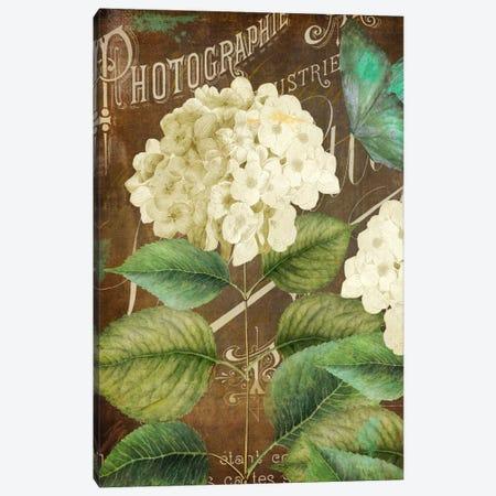 Alabaster Hydrangea Canvas Print #CBY81} by Color Bakery Art Print