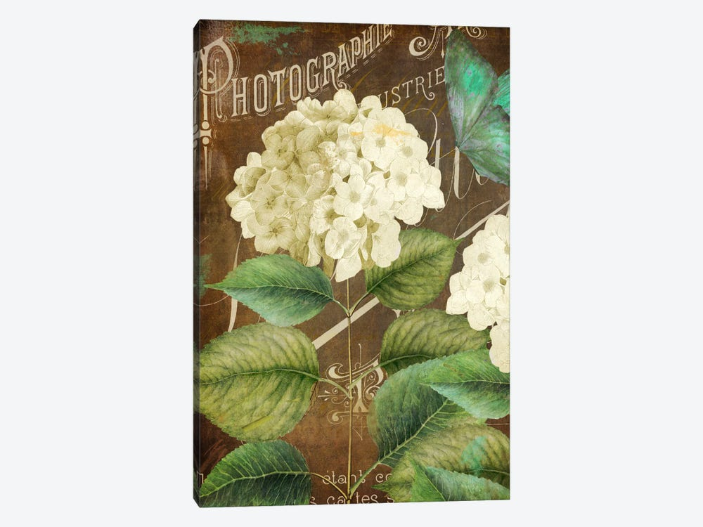Alabaster Hydrangea by Color Bakery 1-piece Canvas Art Print