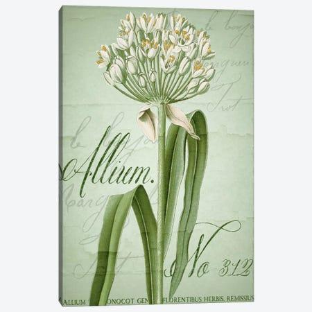 Allium I Canvas Print #CBY82} by Color Bakery Canvas Art Print