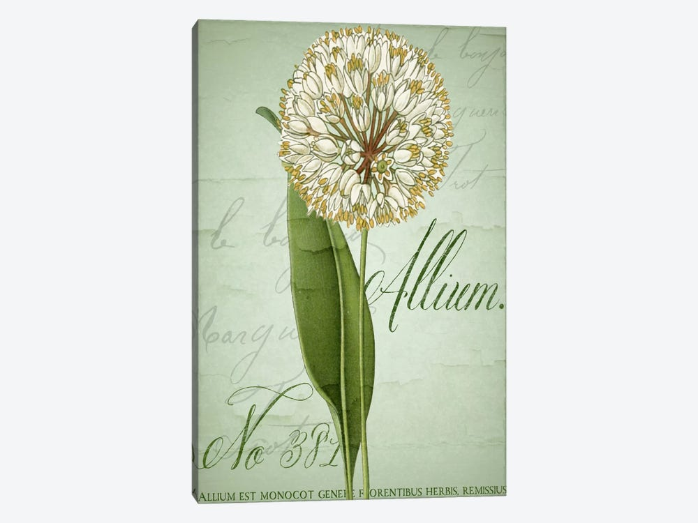 Allium II by Color Bakery 1-piece Canvas Art Print