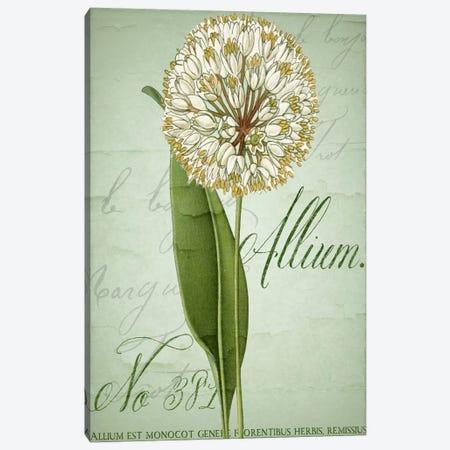 Allium II Canvas Print #CBY83} by Color Bakery Art Print
