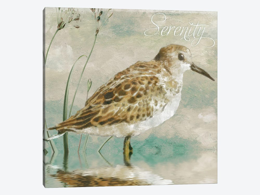 Sand Piper I by Color Bakery 1-piece Canvas Print