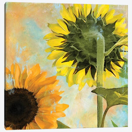 Soleil II Canvas Print #CBY912} by Color Bakery Canvas Art