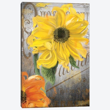 Sunflower Studio 3-Piece Canvas #CBY943} by Color Bakery Art Print