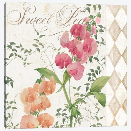 Sweet Pea Canvas Print #CBY950} by Color Bakery Canvas Artwork
