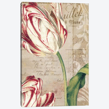 Tulips Canvas Print #CBY979} by Color Bakery Canvas Artwork