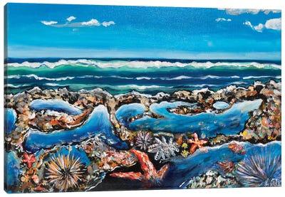 Rock Pool Canvas Art Print