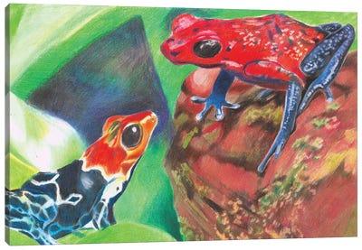 Poison Dart Frogs Canvas Art Print
