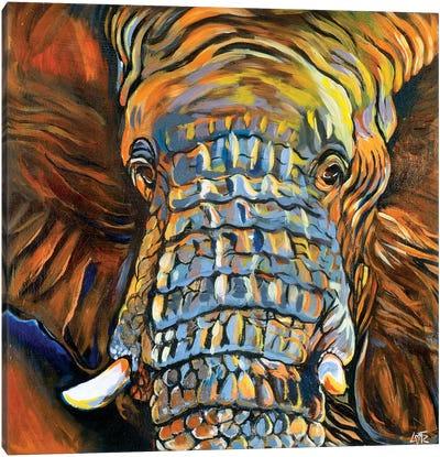 Elephant Portrait Canvas Art Print