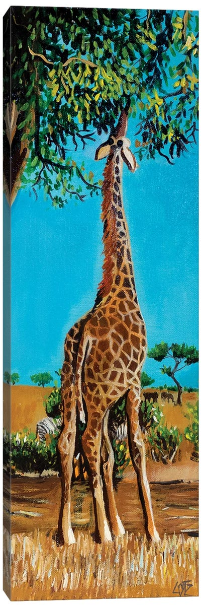 Giraffe Stretching Up To Eat Leaves Canvas Art Print