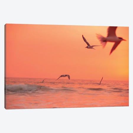 Flying High Canvas Print #CCD118} by Charlotte Curd Canvas Wall Art