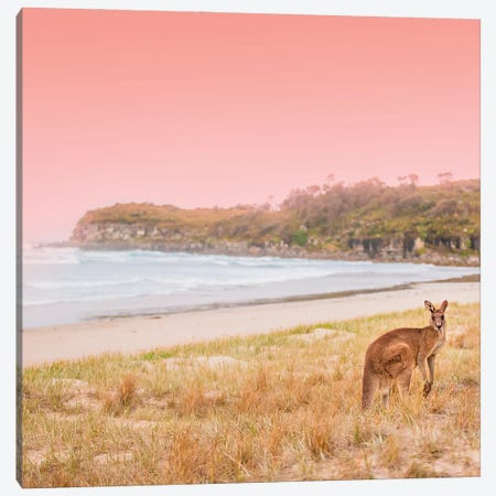 Roo Canvas Print #CCD41} by Charlotte Curd Art Print