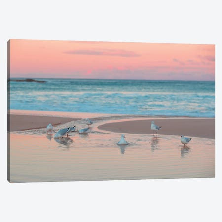 Seagull Swims 3-Piece Canvas #CCD43} by Charlotte Curd Canvas Art Print